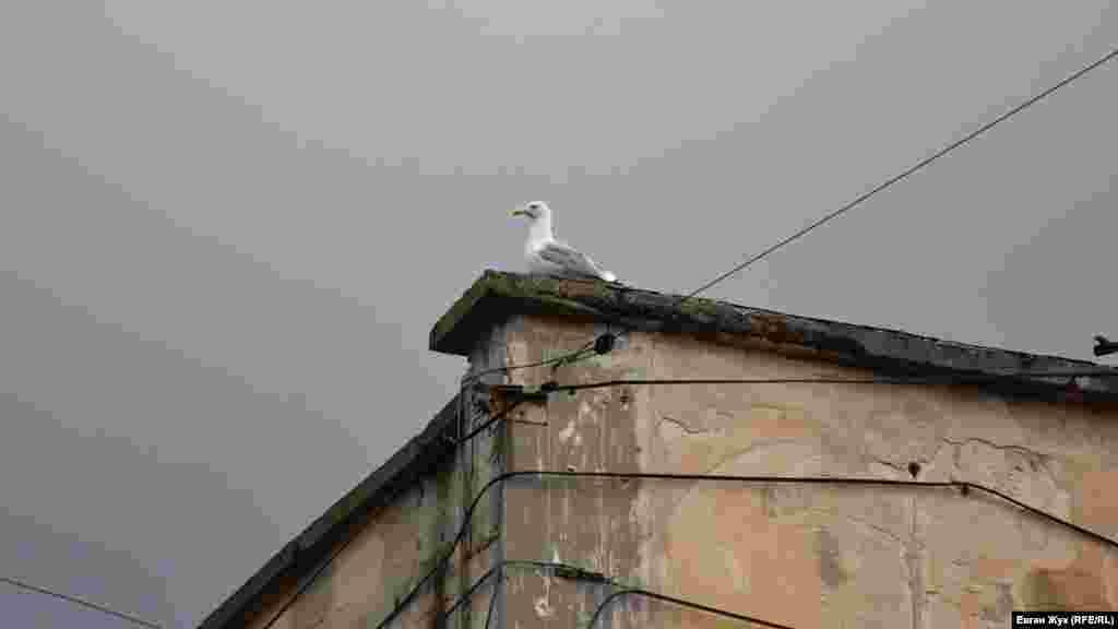 Чайка нахохлившись сидит на крыше