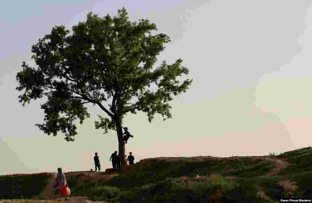 Children play around a tree in Islamabad, Pakistan. (Reuters/Caren Firouz)