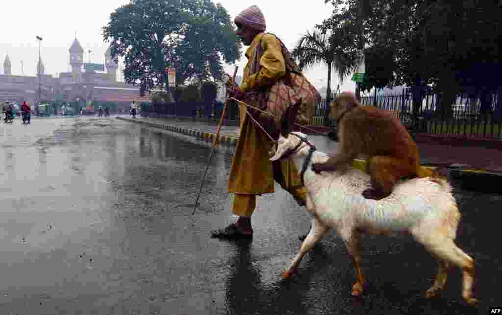 A street performer walks with his trained monkey and goat during a heavy rain in Lahore, Pakistan. (AFP/Arif Ali)