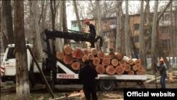 Вырубка чинар в Ташкенте.