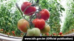 Turkmenistan. Turkmenistan strengthens its position as an exporter of fruits and vegetables, TDH agency reports.
