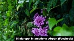 Зелена стіна в аеропорту Сімферополя, 8 березня 2019 року