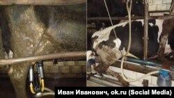 Фота зьявіліся на старонцы «Иван Иванович» у сацыяльнай сетцы ok.ru