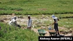 Көне Талхиз қаласы орнында археологиялық қазба жұмыстарын жүргізіп жүрген адамдар. Алматы облысы, 20 маусым 2009 жыл