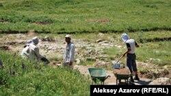 Работа археологов на городище Тальхиз. Алматинская область, 20 июня 2009 года. Иллюстративное фото.