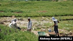 Работа археологов на городище Тальхиз в Алматинской области.