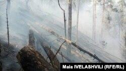 Лесной пожар, иллюстративное фото