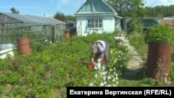 Типичная байкальская дача: картофель растет в бочках, а клубника занимает весь огород