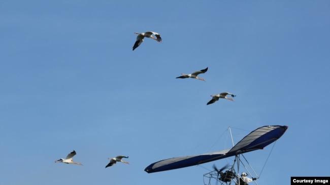 Тренировочный полет (фото предоставлно Окским заповедником)