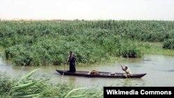مشهد من الأهوار في العراق