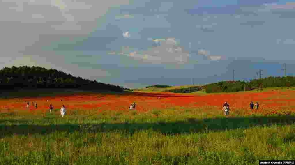 Цветущая Бельбекская долина