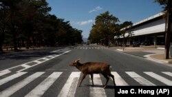 Животные на улицах мира, опустевших из-за карантина (фотогалерея)
