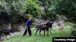 С наступлением осени жители сел почти каждое утро выходят из дома до восхода солнца, с топором в руке пешком поднимаются в лес – к участку, выделенному местными властями под вырубку