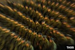 """Беспокойство правозащитников вызывает не патриотизм, а насаждение """"военного патриотизма"""""""
