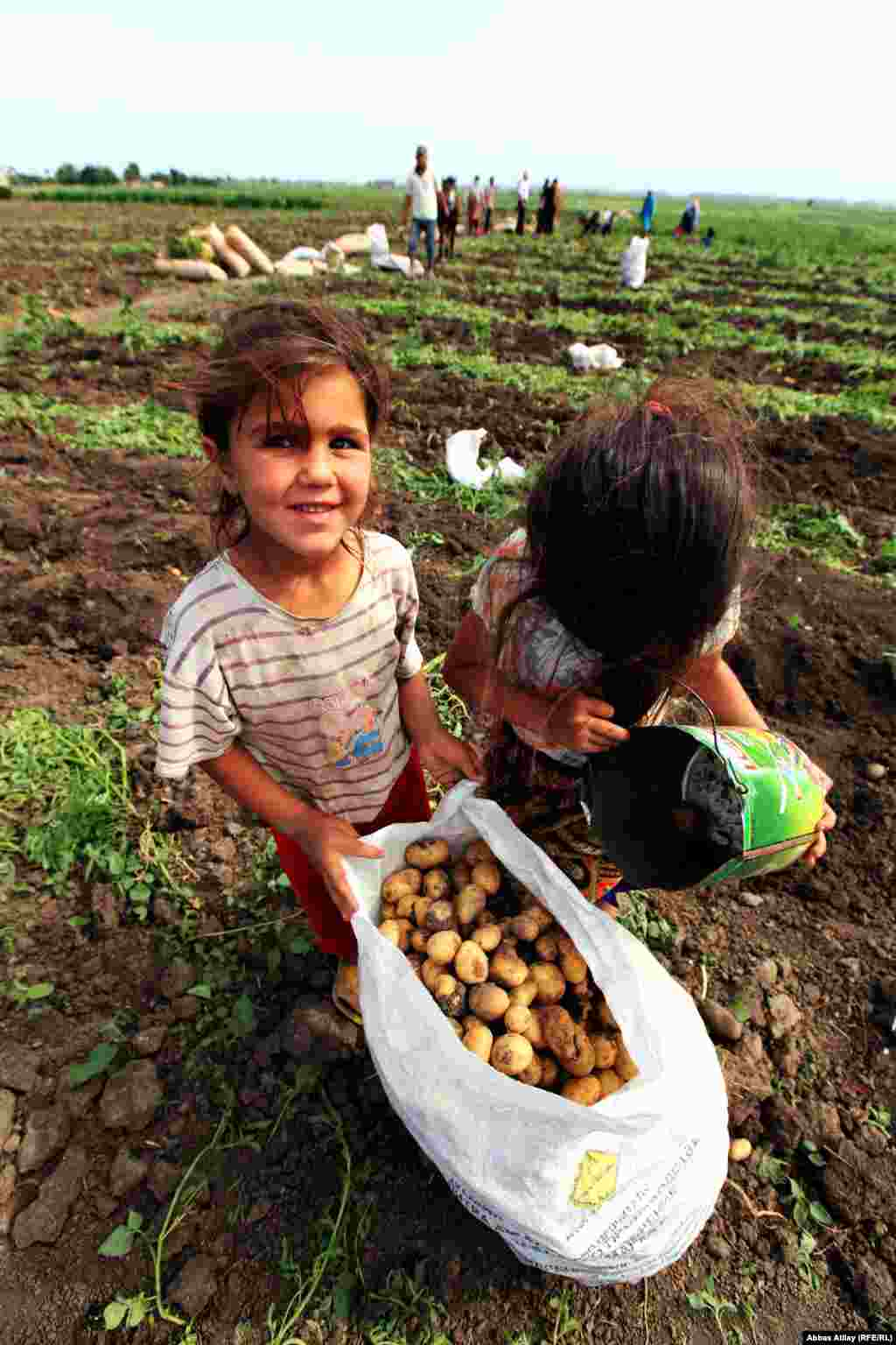 Children help their parents with the potato harvest in the village of Jalilabad. The region is more famous for growing limes and tea.