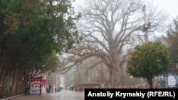 Туман в Сімферополі