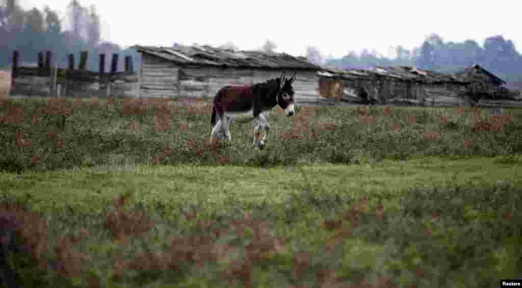 A donkey at a farm in Zasavica