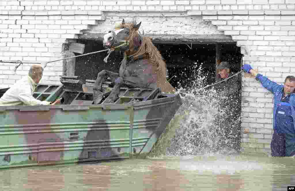 Farmers help a horse to jump into an amphibious vehicle to escape flooding in the village of Juliszew in central Poland. At least 15 people have died as a result of severe floods in Poland in recent days. Photo by Janek Skarzynski for AFP
