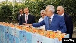 Prezident İ.Əliyev və «Azərsun Holdinq»in rəhbəri A.Gözəl
