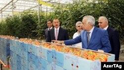 İlham Əliyev «Azərsun Holdinq»in müasir istixana kompleksi ilə tanış olur – 13 iyul 2012