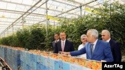 """Prezident İlham Əliyev """"Azərsun""""un istixanasında"""