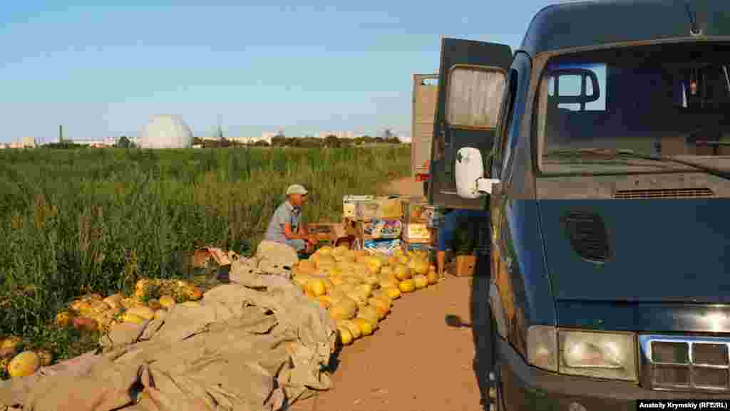 Дыни сорта «Корса» пакуются для отправки на рынки Евпатории