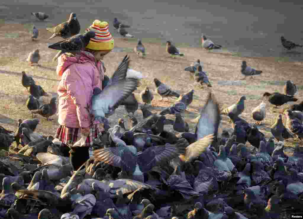 A girl feeds pigeons in a park in Almaty, Kazakhstan. (Reuters/Shamil Zhumatov)