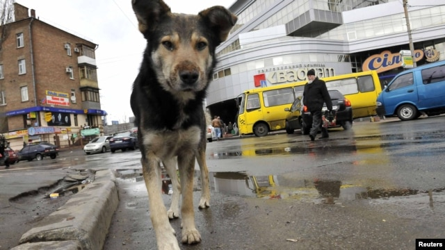 A stray dog walks on a street in Kyiv, which alone has an estimated stray population of over 25,000.