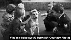 """""""Венок для собаки"""". Дети пришли в школу и увидели собаку, которую решили одарить цветами"""