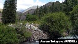 """11 adamyň jesedi tapylan """"Ile-Alatau"""" atly jemgyýetçilik parkynyň bir bölegi. Almaty oblasty, 2010."""