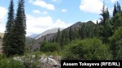 Іле-Алатау ұлттық паркі. (Көрнекі сурет)