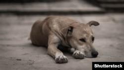 Год Собаки. Какими правами обладают животные?