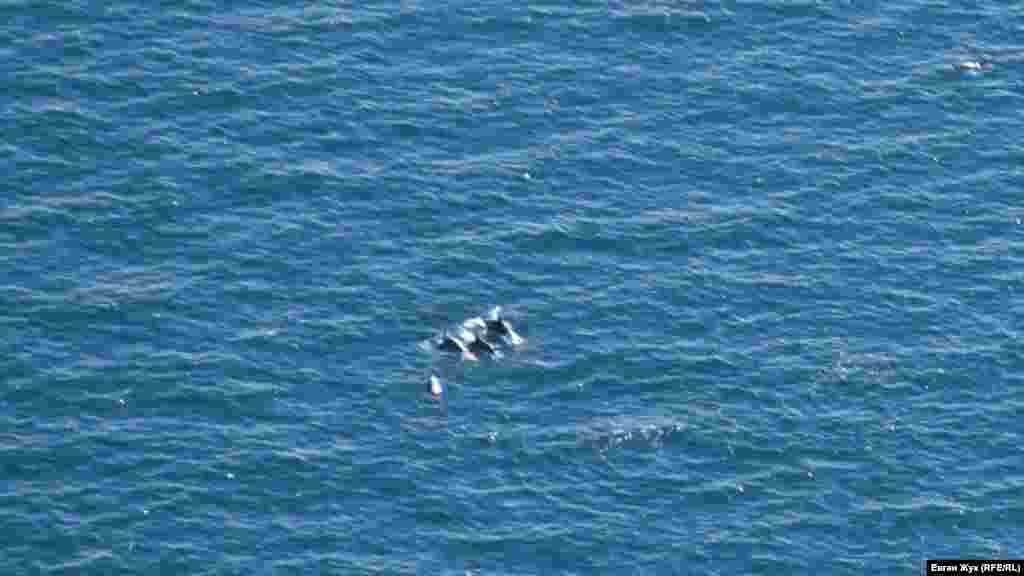 Далеко внизу у входа в Балаклавскую бухту резвятся дельфины