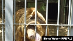 Медведь в зоопарке Караганды. Август 2013 года.
