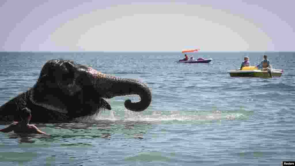 Слон із пересувного цирку під час купання на центральному пляжі в Євпаторії, серпень 2018 року