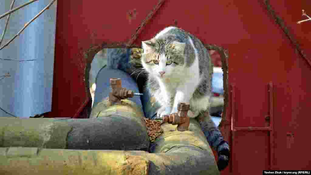 За псом із труб теплотраси уважно спостерігає вуличний кіт, якому хтось щедро відсипав сухого корму