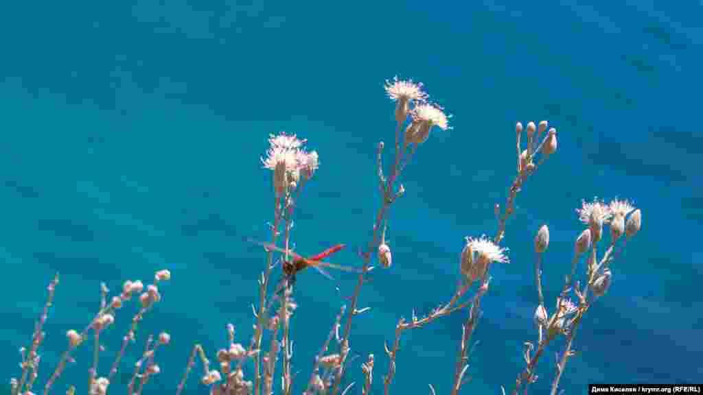 Тарханкут входить до степової зони. Дуже часто трапляються висохлі рослини і різнокольорові бабки