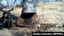 Базар-Коргон районундагы Кызыл-Үңкүр токой чарбасы