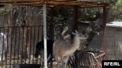 Bakı zooparkında hazırda 170 növdə heyvan saxlanılır
