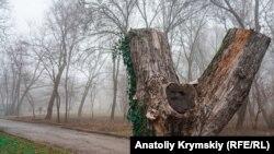 Туман у Криму, архівне фото