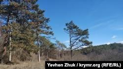 Выше усадьбы находится урочище Кесслерский лес, а внизу течет Салгир