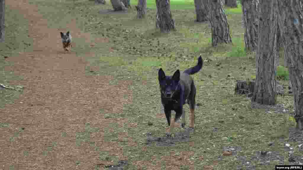 Из ближайшего села в лес прибежали собаки