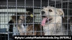 Собаки в приюте для животных. Иллюстрационное фото