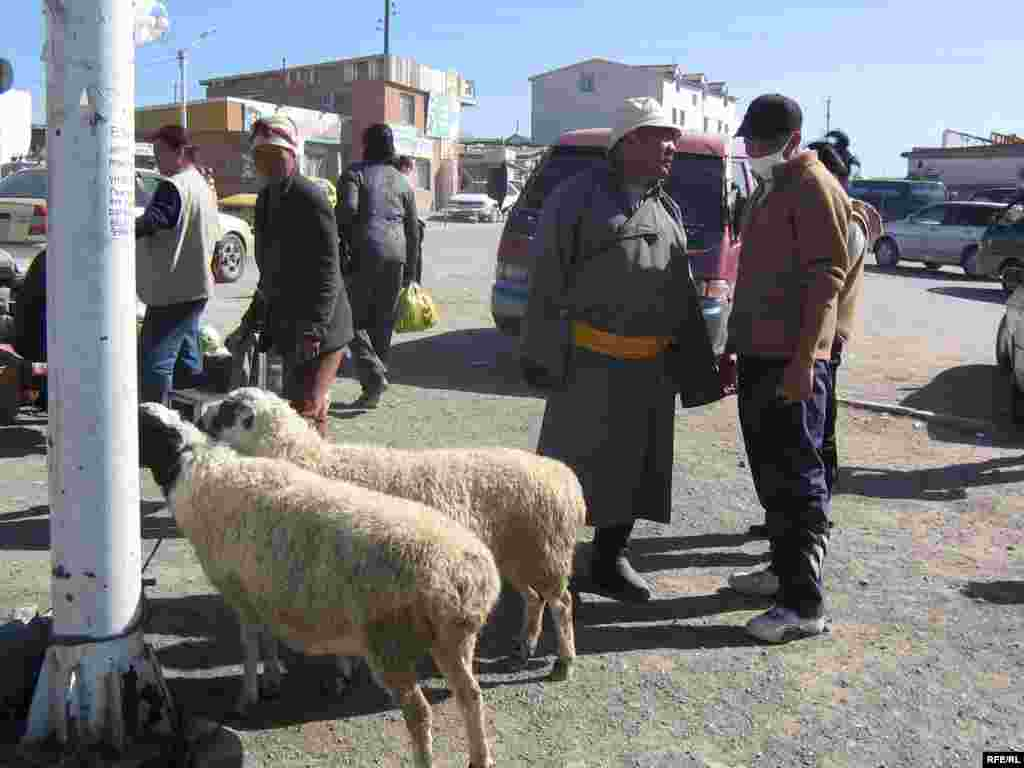 A sheep sale under way in a suburban district of Ulan Bator. - Mongolia has more sheep than people. Sheep are valued for their wool, milk, meat, and even their bones. A large, healthy sheep -- judged by the plumpness under their tail -- can sell for 55,000 tugrik, or approximately $38.