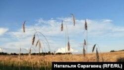 Вёска Дубнікі, Любанскі р-н. Фота: Натальля Сарагавец