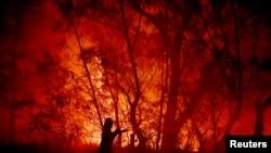 Масштабні лісові пожежі ширяться Австралією