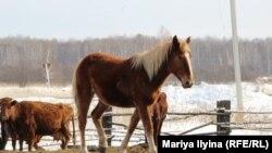 Ферма Марии Макашевой