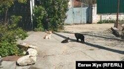 Местные коты греются на солнце