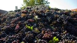 Ce e de făcut ca producția vinicolă să-și revină după pandemie?