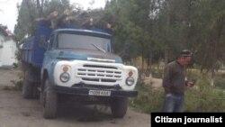 Вырубка деревьев в Шурчинском районе Кашкадарьинской области.